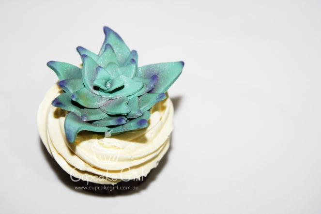 cupcakegirl.com.au - Succulents (13)